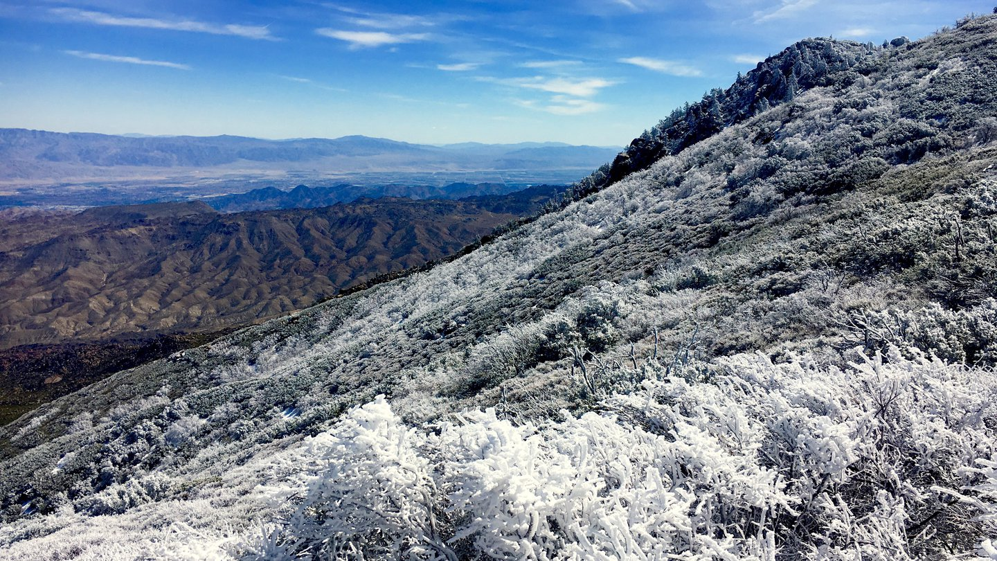 snow covered plants in the mountainous foreground give way to the desert valley of Palm Springs