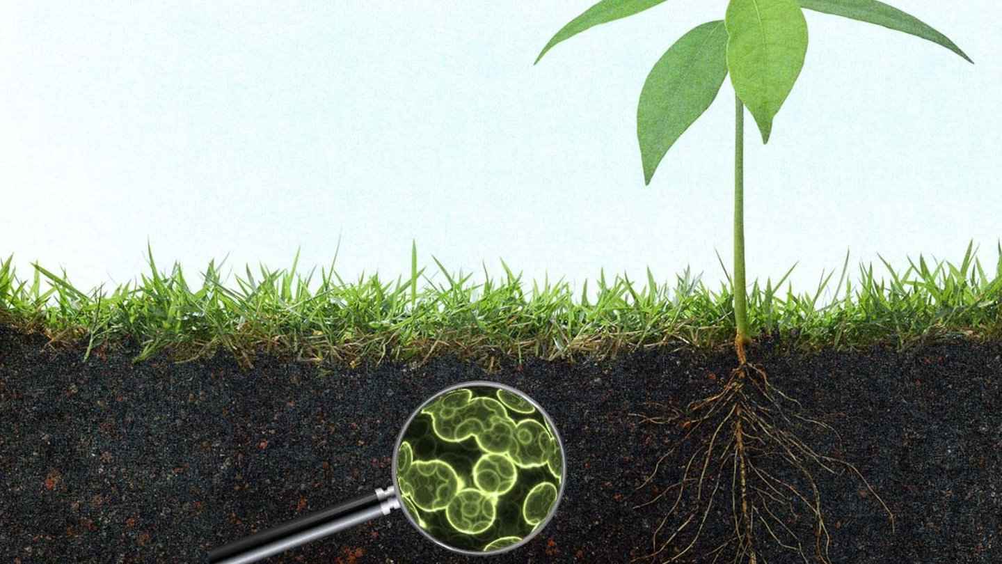 graphic showing microbes in soil beneath a growing plant