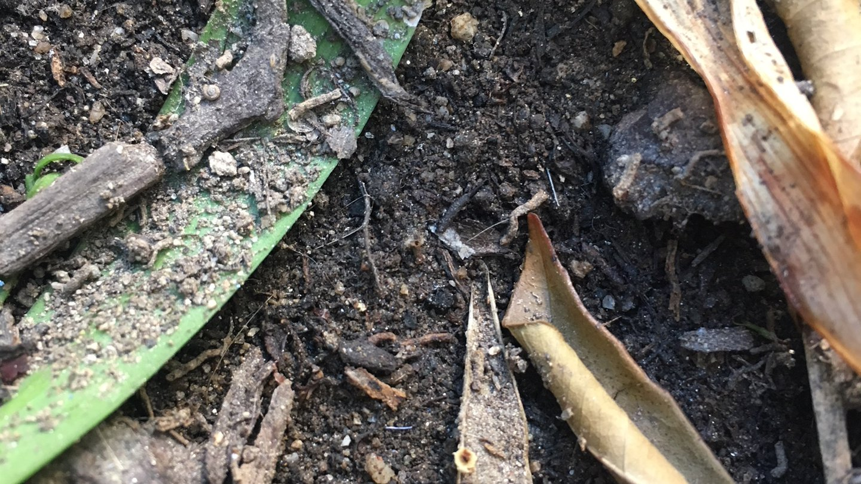 Caltech soil