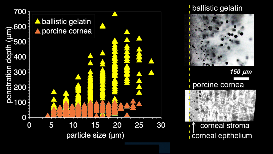 biolistic particle penetration depth as a function of particle size comparing gel to cornea