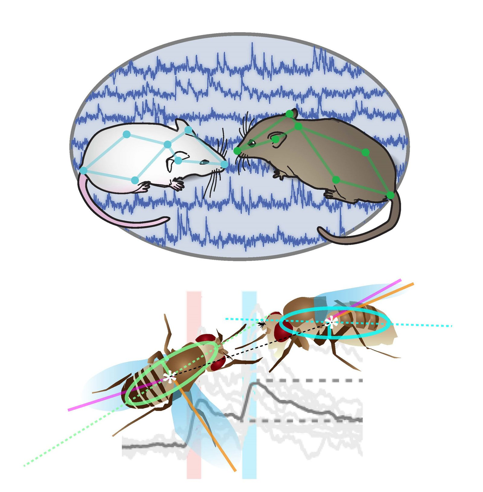 Mice and Flies as Behavior Models