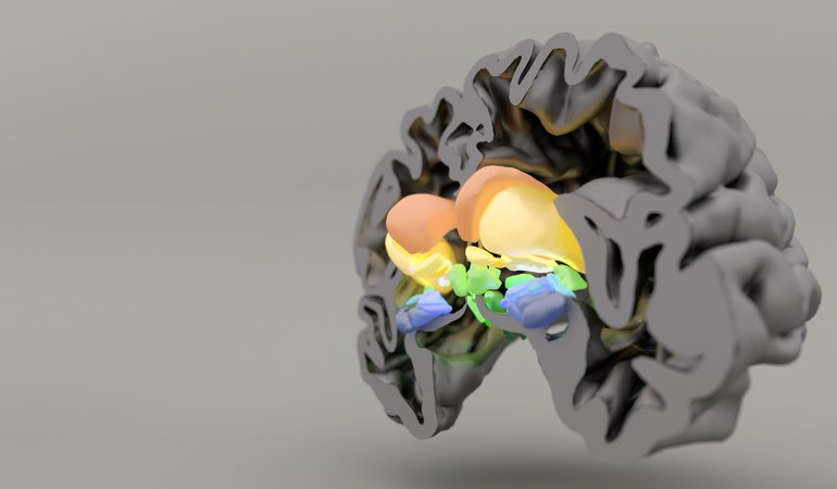 3D cross section of a brain with the mid section lit up.