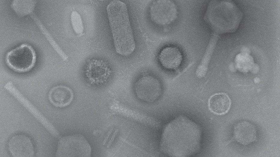 PhageEcology