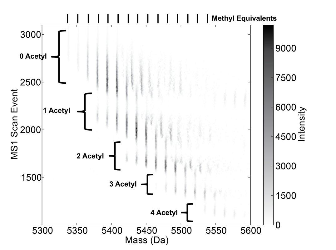 histone analysis
