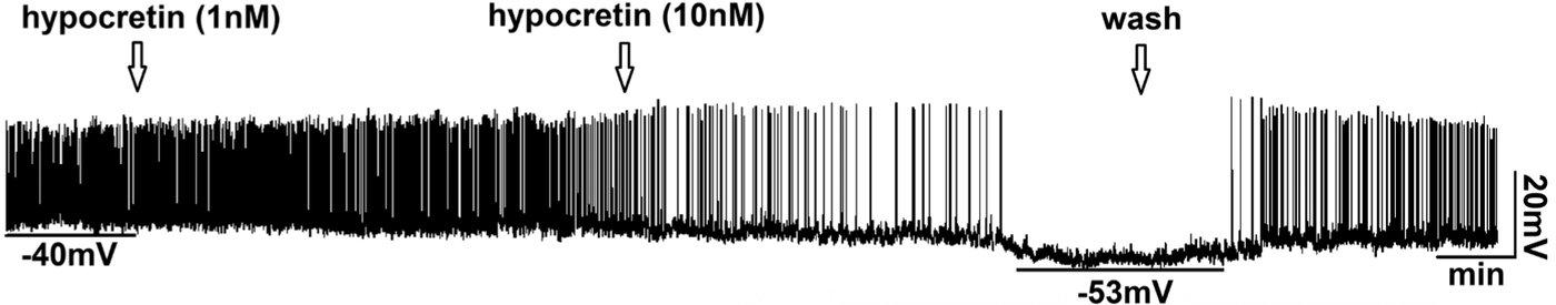 GnRH figure.jpg
