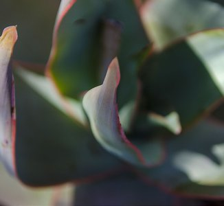 close up of a succulent