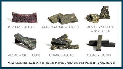 Examples Algae-Based Biocomposites from C. Daraio's Lab