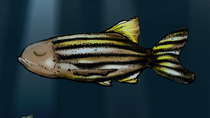 illustration of a sleeping fish