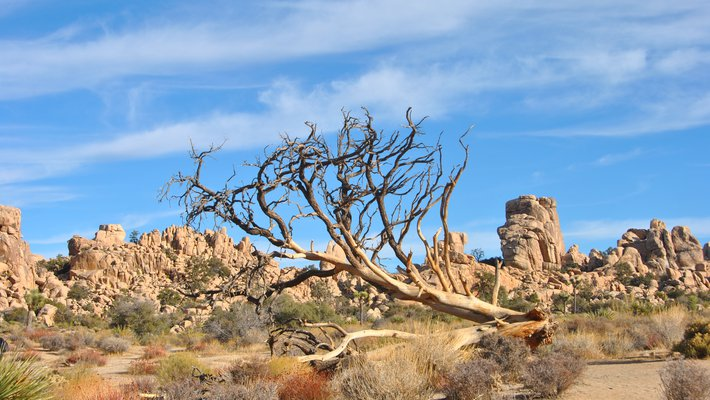 A dry desert landscape