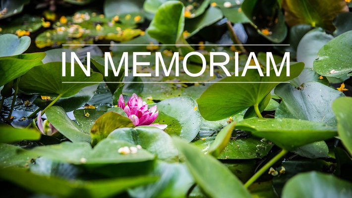 "An image of lily pads in a pond overlaid with text reading ""In Memoriam."""