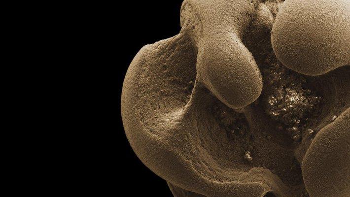 Scanning electron micrograph of manganese nodule.