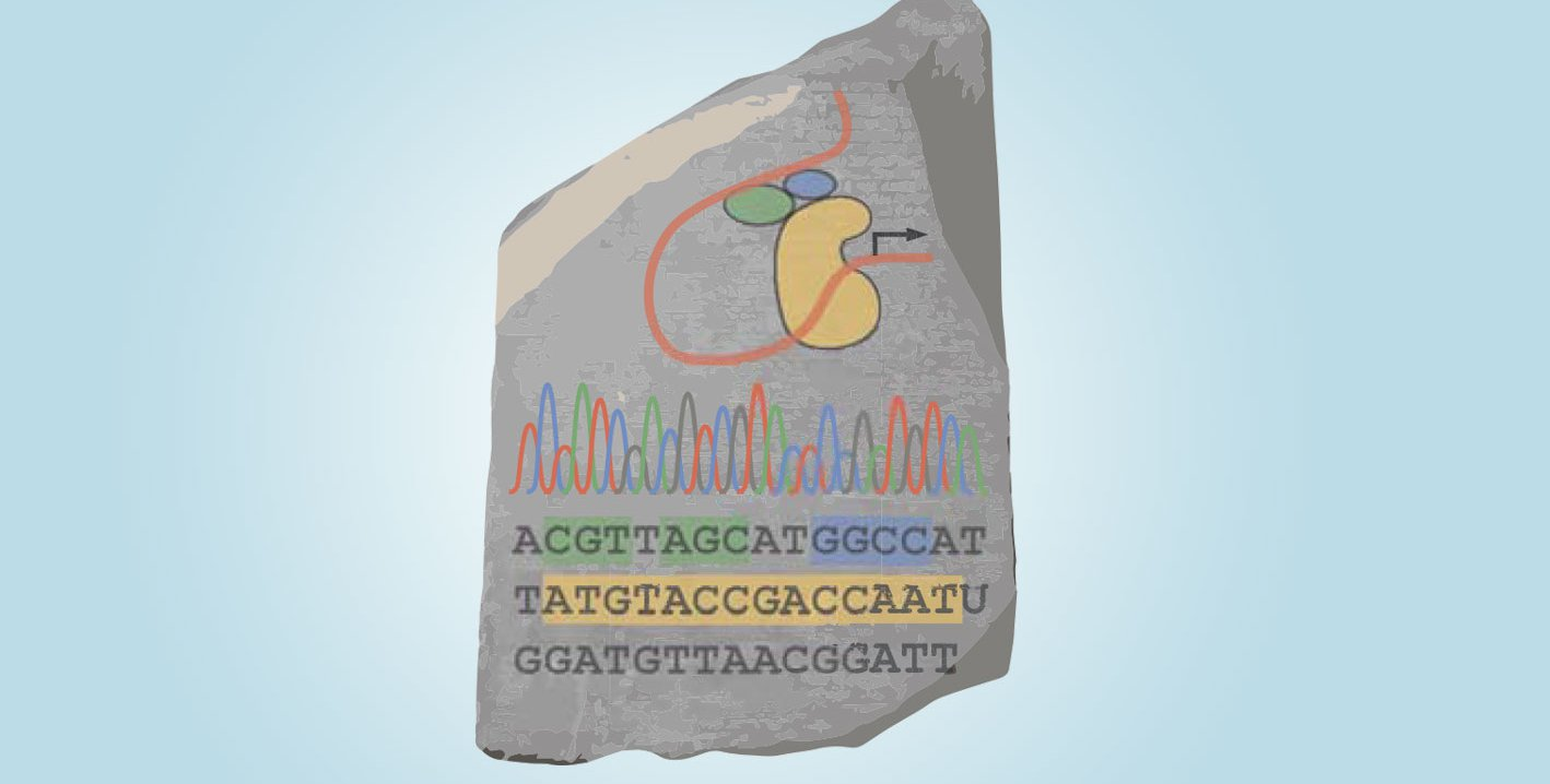 A Rosetta Stone illustrated with genetic sequences