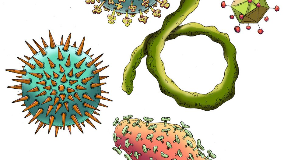 Artist's concept illustration of the various types of viruses.