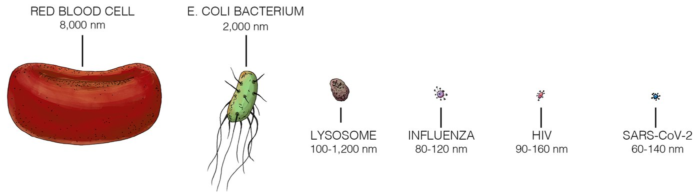 Artist's concept illustration showing the different scale sizes with a focus on viruses.