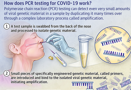 Infographic: How does PCR testing for COVID-19 work?