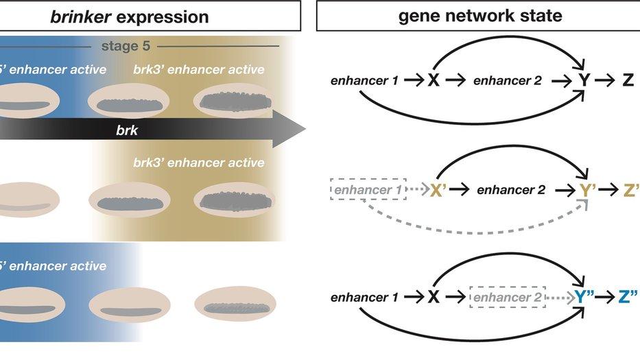 brk dynamics schematic