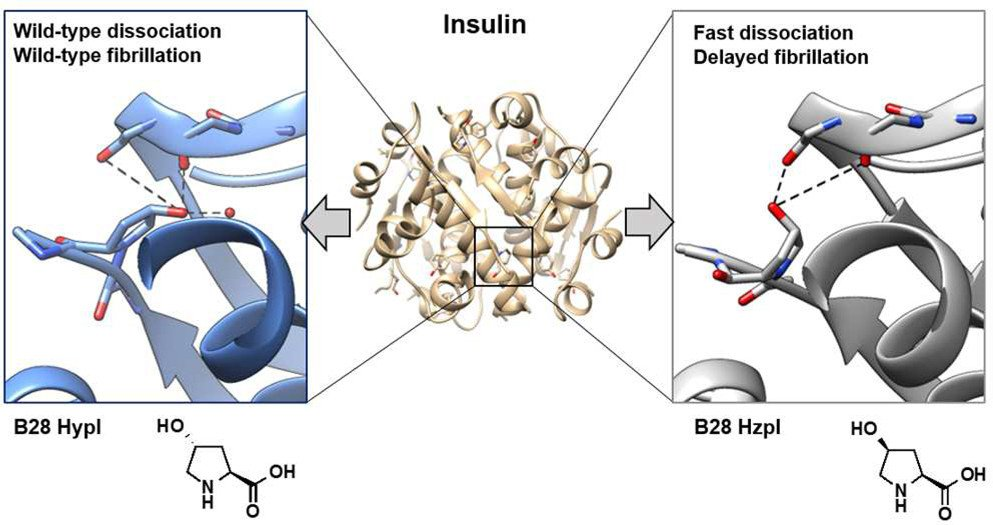 Insulin Engineering