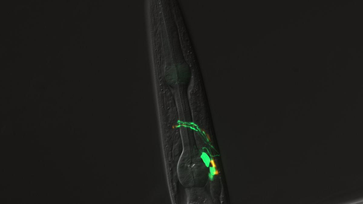 Worm Image